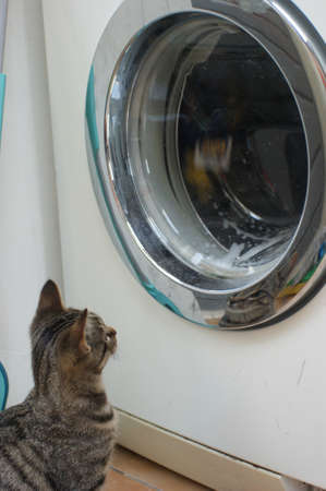 Curious tabby cat kitten playing with the tumbling laundry in the washingmachine Stockfoto