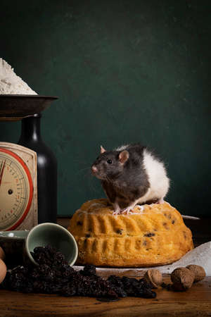 A Cute white and brown rat sitting in a stil life scene themed baking cake green background Banque d'images