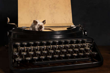 A Still life with siamese mice on a typewriter and phone making contact and communicating