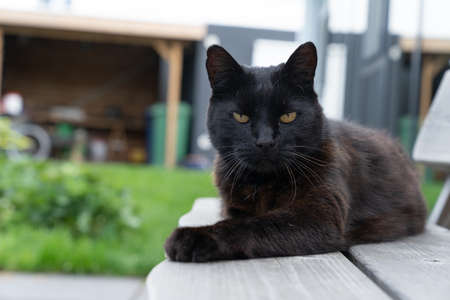 A Black cat lying on a bench in the backyard