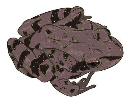 The beautiful spotty brown frog (amphibian) sits. Illustration