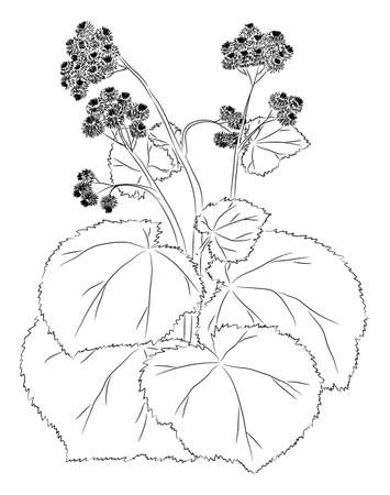 The burdock sketch. Graphic work. There is a variant in a vector. Illustration