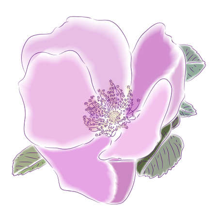 Bright pink flower of a dogrose. A  illustration.   Stock Photo