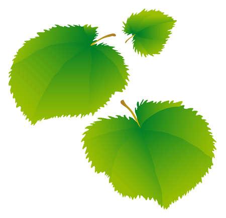 lindeboom: Jonge groene bladeren van een linden. Stock Illustratie