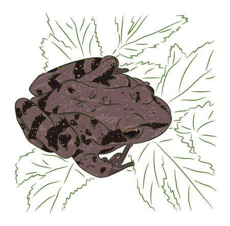 The brown meadow frog sits on green leaves Illustration
