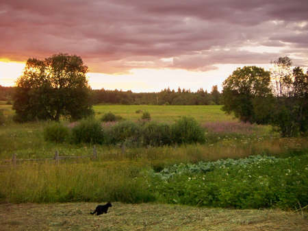 The small black cat goes on an oblique grass to a kitchen garden. On a background a decline over wood and a field. photo