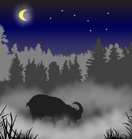 The goat costs in a fog against wood a moonlight night photo