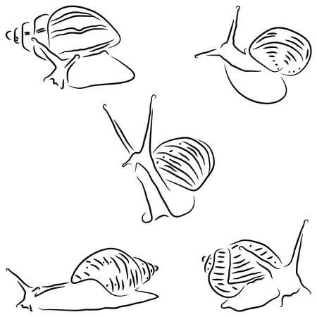 Painted snail Achatina Illustration