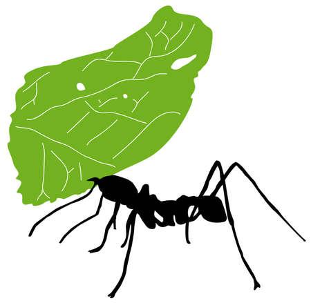 hormiga hoja: Hoja de hormiga cortadora Vectores
