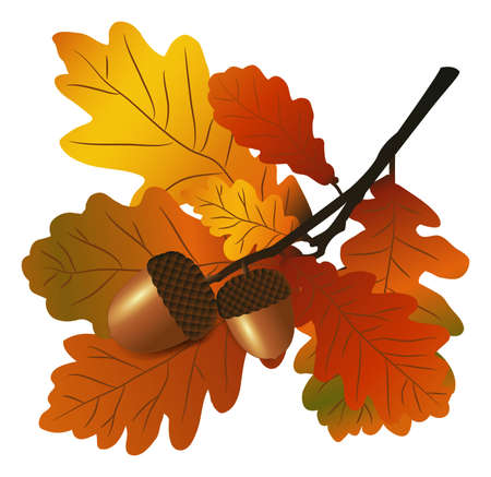 Oak branch with acorns Vector