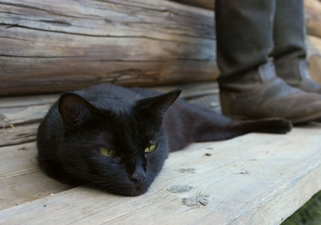 tarpaulin: Black cat lying beside tarpaulin boots on a wooden bench  Focus on the boots