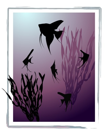Aquarium with silhouettes of fishes (scalare) and seaweed.