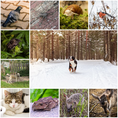 arthropod: Collage with animals Stock Photo