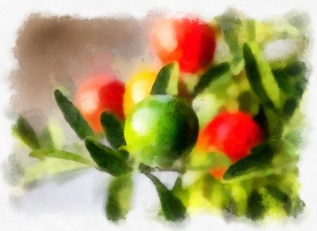 nightshade: Nightshade berries, solanum pseudocapsicum Stock Photo
