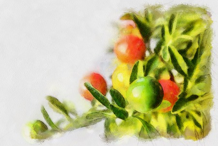 food poison: Plant with orange, red and green berries, solanum pseudocapsicum.