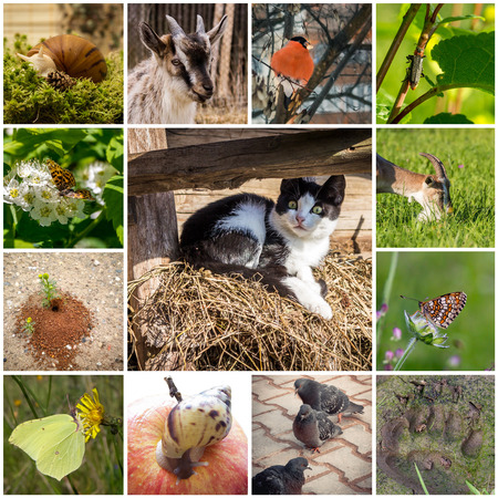 A collage of 13 pictures with different animals. In the center of a surprised kitten.