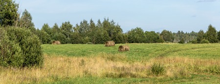 hayroll: Rural landscape with rolls of hay on the field.
