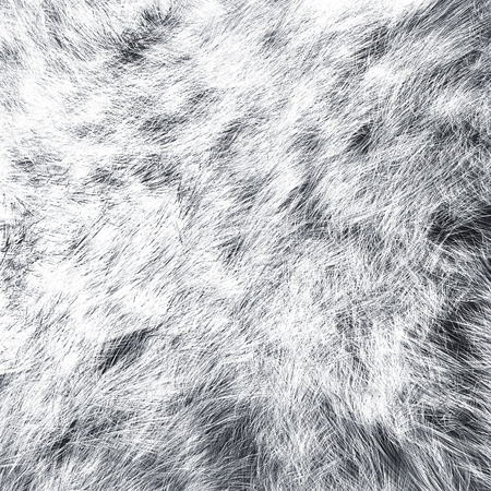 masquerading: White wolf skins texture - close-up 3D rendering. Fashion element design. Stock Photo