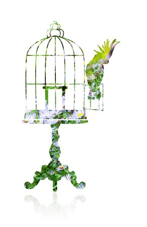 Double exposure with a silhouette of an elegant coffee table and a birdcage. Cockatoo sits on the door open cage. Stock Photo