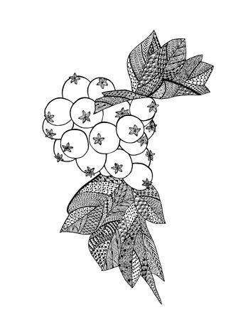 garabatos: Hawthorn bayas de dibujo