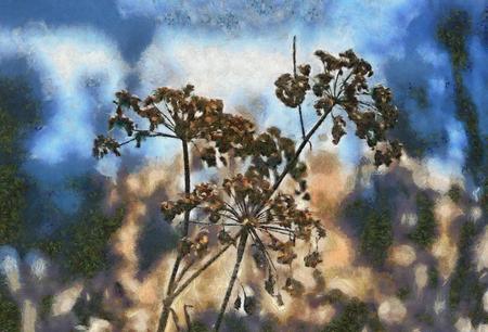 Painted illustration with Umbrellas Aegopodium podagraria