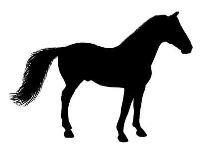 Silhouette of a standing horse