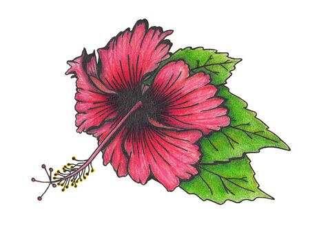 Hibiscus flower with leaves