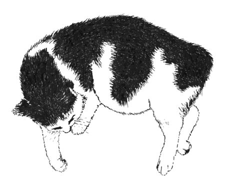 Sleeping black and white cat. Ink drawing. Drawn by hand. There is an option in the vector.