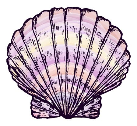 Sea shell. Realistic ink pen drawing. Sketch markers. Drawn by hand. Isolated on white. Design for card, poster or wallpaper. There is an option in the vector.