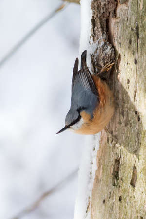 Small cute bird in winter theme hanging on the tree trunk