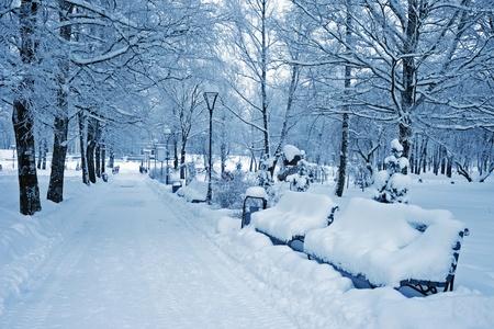 tonalit�: Avenue dans le parc de la ville en hiver. Bancs de neige se remplis