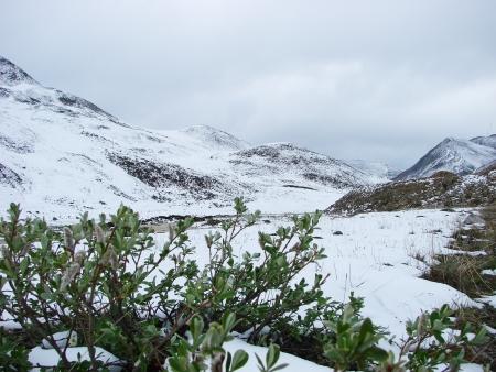 frost bound: On July, 04th, 2007  Russia, Chukchi Autonomous region  Snow summer of mountain tundra