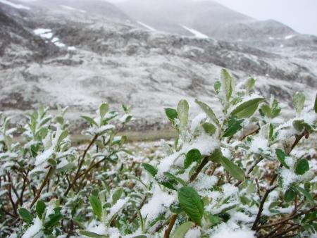 frost bound: On July, 12th, 2007  Russia, Chukchi Autonomous region  Snow summer of mountain tundra