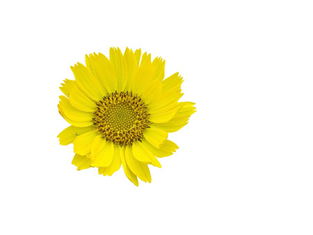 far east: Rusia, Lejano Oriente La vegetaci�n y la isla Urup flores de la flor en un fondo blanco