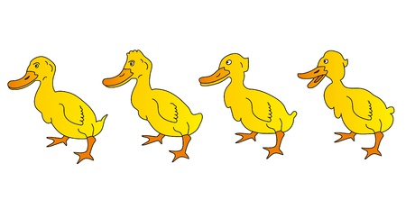 color image mallard duck: Duck Illustration