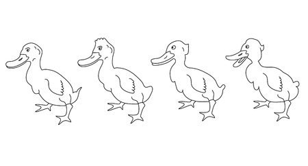 canada goose: Duck Illustration
