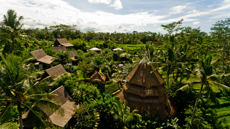 Bungalows in the jungle. Aerial view.