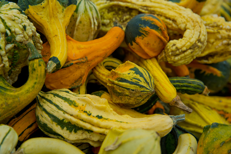 A variety of colored decorative pumpkins at the market place. Background close-up. Stock Photo