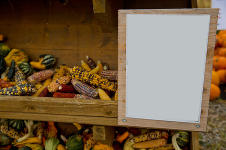 A variety of colored decorative corn at the market place.