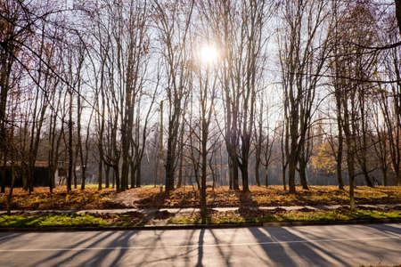 Autumn landscape in the city park.
