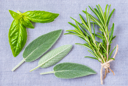 Fresh aromatic herbs, sage, rosemary and basil top view. Stok Fotoğraf