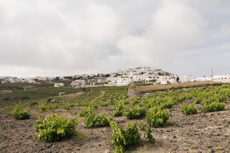 View of Pyrgos town with vineyard on the foreground, Santorini island, Greece Stok Fotoğraf