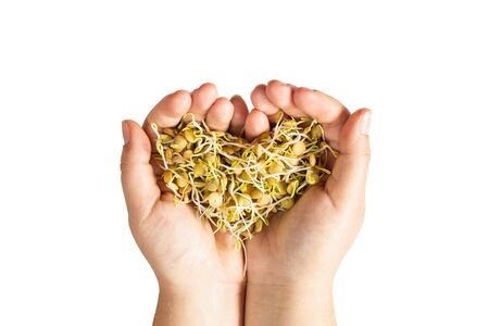 Female hands holding microgreen lentil sprouts in heart shape. Isolated image on white background.