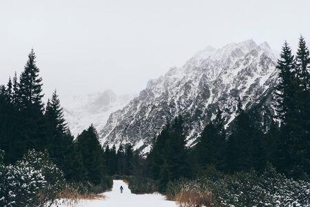 Small human figure walking towards High Tatra mountains through pine tree forest in winter, Slovakia.