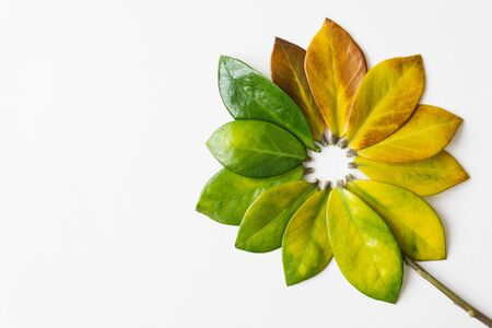 Green and yellow tree leaves arranged in the shape of a flower. Vertical orientation