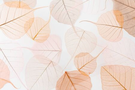 Background floral pattern of dry tree leaves. Levitation effect and pastel colors.