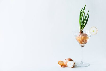 Green onion growing in a stemmed cocktail glass on white background. Healthy, vegetarian and organic farming concept. Banque d'images