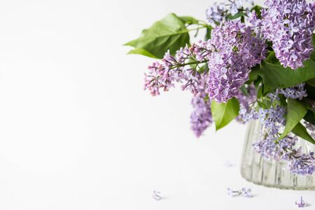 Purple lilac blossom standing in a glass vase on white background. Spring flowers still life with copy space for your text.