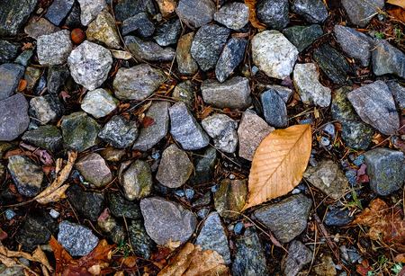 brown background: the stones and dry leaf on the ground