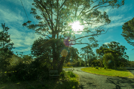 suburb: A great warm afternoon in the suburb of Sydney with nice sunshine flare through the tree